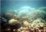 Corals around Coral Point