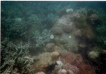 Some corals near Lighthouse