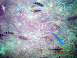 Fishes around the Jetty
